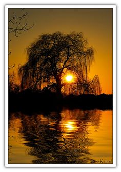 Goin to plant a weeping willow On the banks green edge it will grow grow grow Weeping Willow, Willow Tree, Druid Symbols, Beautiful Places, Beautiful Pictures, Lake Pictures, Tropical Plants, The Great Outdoors, Nature