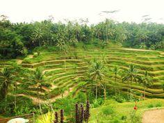 Tegallalang Rice Fields - Bali