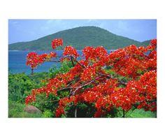 george-oze-tropical-colors-culebra-puerto-rico.jpg (473×394)