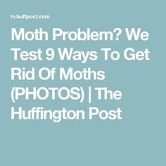 Moth Problem? We Test 9 Ways To Get Rid Of Moths (PHOTOS) | The Huffington Post
