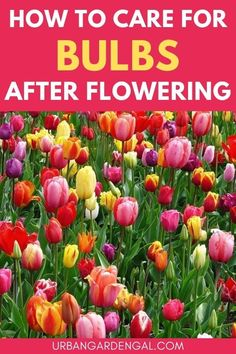 Flower bulb care - Some bulbs can be left in the ground over the winter months, while others will need to be dug up and stored for the next planting season. Here's how to look after your flower bulbs so you can enjoy beautiful blooms year after year. #flowers #bulbs #flowergarden Planting Bulbs, Planting Flowers, Flower Gardening, Growing Tulips, Canna Lily, Spring Flowering Bulbs, Annual Flowers, Look After Yourself, Bulb Flowers