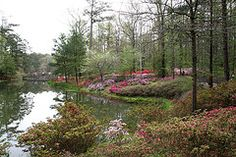 Callaway Gardens - a beautiful place, any time of year.