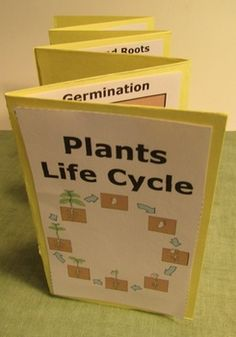 Plants Life Cycle: Your students will love this hands-on plants craftivity. The students will make a Plants Life Cycle accordion. The students will need to research plants to discover fun facts about each stage of the life cycle. A completed plants accordion book is also included as a key or for a modification for students with special education needs. Each book comes in color and in black and white.