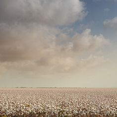 Just a few weeks ago I had my friend pull over next to a harvested cotton field to bring some bolls of cotton to my friend's little girl, so she could see what they felt like straight out of the field.