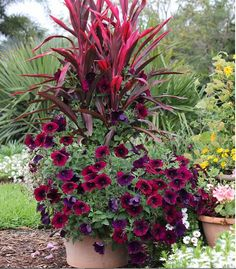 Spectacular container garden arrangements