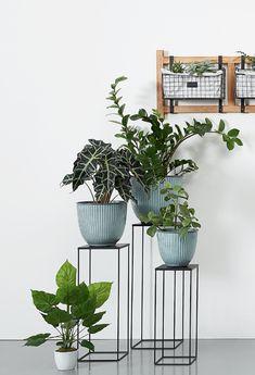 Decorating Your Home, Diy Home Decor, Interior Decorating, House Plants Decor, Plant Decor, Indoor Garden, Indoor Plants, Inside Plants, Iron Plant