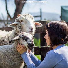 Son como perritos  Muchas personas que colaboran con el santuario se sorprenden en su primera visita de lo sensibles inteligentes y amigables que son los animales que aquí viven. Y es que siempre escuchamos algún son como perritos no sólo de quienes se encuentran con cabras ovejas gallinas vacas y cerdos por primera vez sino también de personas que pensaban que conocían bien a estos animales: gente de campo y veterinarios.  Los animales que explota la industria de la carne leche y huevos son…