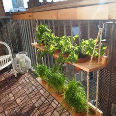 Balkon.bar hangtuin, voor op het balkon!  Kruidentuintje