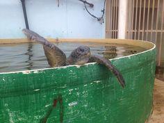 The sea turtle rescue center