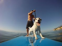 Dogs love to paddle board too! You can rent one of these puppies (the board, not the dog) at Parker Strip Rentals 928-667-4837