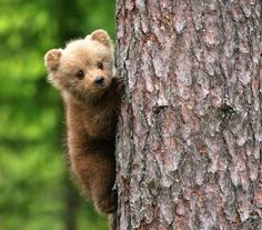 Little bear cub Cute Baby Animals, Animals And Pets, Funny Animals, Bear Pictures, Cute Animal Pictures, Beautiful Creatures, Animals Beautiful, Photo Ours, Love Bear