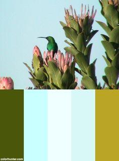 Sunbird Color Scheme