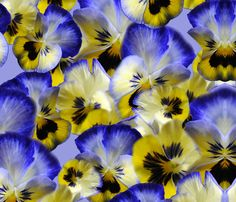 Blueand Yellow Pansies fabric by bloomingvinedesign on Spoonflower - custom fabric