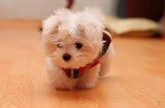 I want this dog so bad!