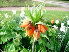 Flowers Parq Ibis-Le Vesinet-Yvelines.France