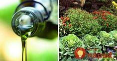 Tušili ste, čo dokáže olivový olej v záhrade?