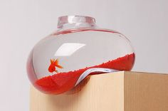 Wow. I'd be scared as the fish though. But if i were a goldfish, i'd anyway forget in 3 seconds.