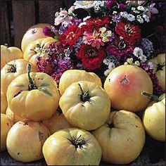 Pase Seeds - Basinga Tomato Seed - 25 Seeds Pase Seeds, $3.49 (http://www.paseseeds.com/basinga-tomato-seed-25-seeds-pase-seeds/)