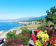 Bench 1775 vineyards Pinot Gris, Wine Case, Growing Grapes, Sauvignon Blanc, Lake View, Wine Country, British Columbia, Wines, Vineyard