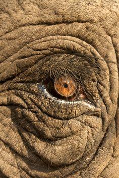 ☆ photo inspiration : mammals, Elephant Encounters x Michael Lorentz Elephant Love, Elephant Art, African Elephant, African Animals, Elephants Photos, Save The Elephants, All About Elephants, Elephant Photography, Animal Photography