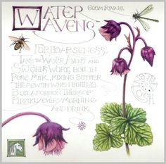 Botanical Painting| Roots of Magic | Water Avens by Helen Lush