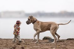 Photographer Andy Seliverstoff, 58, spent four months taking pictures in St. Petersburg, Russia, for a book called 'Little Kids and Their Big Dogs'. The photos show children under 2ft with giant dogs.