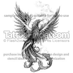 TattooFinder.com: Star Struck Phoenix tattoo design by David Knapp, black and gray, bird, fire, flames, rebirth, rising