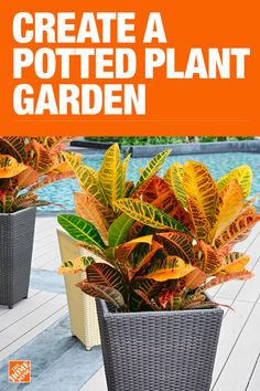Get your garden growing with these simple tips and party how-tos. We have recipes, too, for the herbs and veggies you grew yourself! Find gardening tips and ways to create a garden you will enjoy for years to come. Container Plants, Container Gardening, Gardening Tips, Outdoor Plants, Garden Plants, Outdoor Walls, Potted Plants, House Plants Decor, Garden Yard Ideas