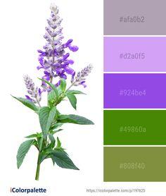 Color Palette Ideas from Plant Flowering Common Sage Image Purple Color Palettes, Purple Palette, Green Colour Palette, Website Color Palette, Sustainable Wedding, Color Codes, Find Color, Lavender Color, Colour Inspiration