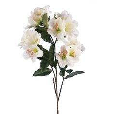 Linea Cream Rhododendron single stem (34 MYR) ❤ liked on Polyvore featuring home, home decor, floral decor, flowers, filler, plants, stuff, sale, flower home decor and linea