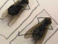 Magnus Muhr: Dead fly comic art