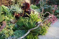 Far Out Flora! Succulent heaven!  If this blog does not make you want to move to California then nothing will! www.faroutflora.com  Succulent Heaven!  If this blog does not make you want to move to California then nothing will! #gardening #gardens #succulents