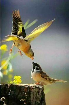 Birds Of Paradise Plant Care, Birds Eggs, - Baby Piggies, Beautiful Birds Images. Most Beautiful Birds, Pretty Birds, Love Birds, Beautiful Creatures, Animals Beautiful, Cute Animals, Exotic Birds, Colorful Birds, Yellow Birds