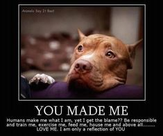### PLEASE READ ###    Humans make pit bulls what they are. Yet they get all the blame? Be responsible and LOVE them. They are only a reflection of you.... ( Please help this get 15,000 shares to help spread the word that there are responsible pit bull owners that love their dog )