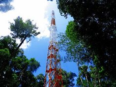 Pregopontocom Tudo: Inauguração da maior torre de pesquisa ambiental ambiental da América do Sul...