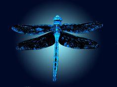Dragonfly Avatar