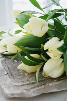 pale yellow tulips