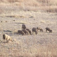 Sun City, National Parks, Places To Visit, Wildlife, Elephant, Animals, Animaux, Animales, Elephants