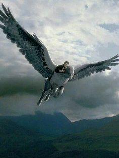 Výsledok vyhľadávania obrázkov pre dopyt hippogriff harry potter