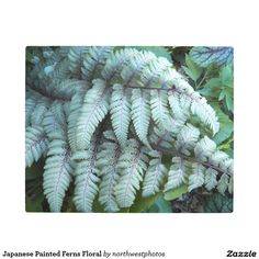 Japanese Painted Ferns Floral Metal Photo Print