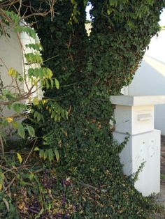 Tree remove and replace with burning bush, numbers for postbox