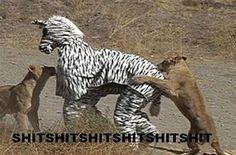 Zebra Dress Up Meme | Slapcaption.com