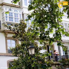 Busca un lugar que te regale un buen recuerdo, una foto que siempre quieras volver a mirar. #visitacoruña #viajar #ACoruña Spain, Pita, Plants, Tourism, Cities, Traveling, Pictures, Sevilla Spain, Plant