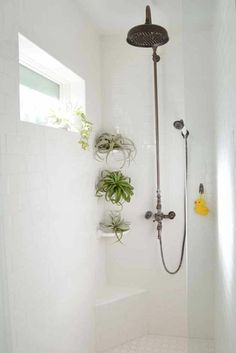 Shower plants and hanging plants in the bathroom are trending for good reason. the humid air in most bathrooms can do the heavy lifting for you in terms of care and watering. The perfect low-maintenance alternative to fiddle leaf figs. Mini Terrarium, Tropic Spa, Small Bathroom, Master Bathroom, Bathroom Ideas, Design Bathroom, Good Bathroom Plants, Bathrooms Decor, Shower Bathroom