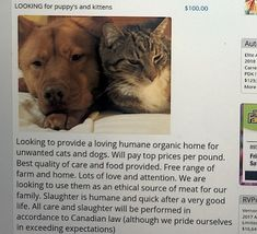 At first glance, a classified ad looking for puppies and kittens might not seem all that unusual. Buy Pets, Find Pets, Yulin Dog Festival, Pot Belly Pigs, Animal Protection, Power To The People, Kittens, Cats, Animal Welfare