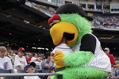 Pittsburgh Pirate Parrot!