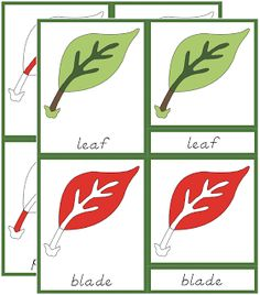 Parts of the Leaf Cards Printable - The Helpful Garden Montessori