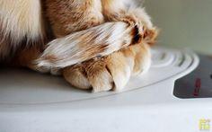 特集コラム 「ネコラム第6回 〜猫のキモチは、しっぽでわかる!のお話し〜」 http://kansai-photo.girly.jp/column/nekolumn006 #関西カメラ女子部 #ネコラム #しっぽ #kansaiphotogirl