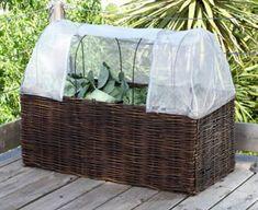 Diese Pflanzboxen bestehen aus einem inneren Pflanzstock aus Folie, der mit Erde gefüllt wird, und aus dem äußeren Weidengeflecht, das sich für den Winter...