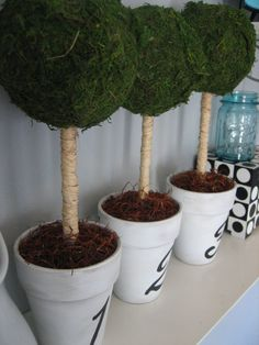 DIY your own topiary for table decoration indoor or outdoor or as yr garden decos will work too